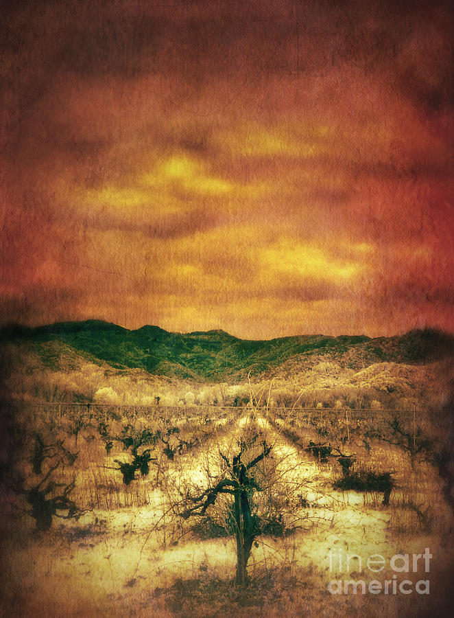 Sunset Over Vineyard Photograph  - Sunset Over Vineyard Fine Art Print