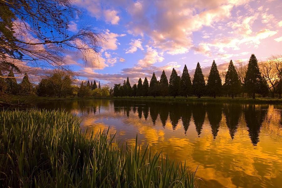 Sunset Reflection On A Pond, Portland Photograph