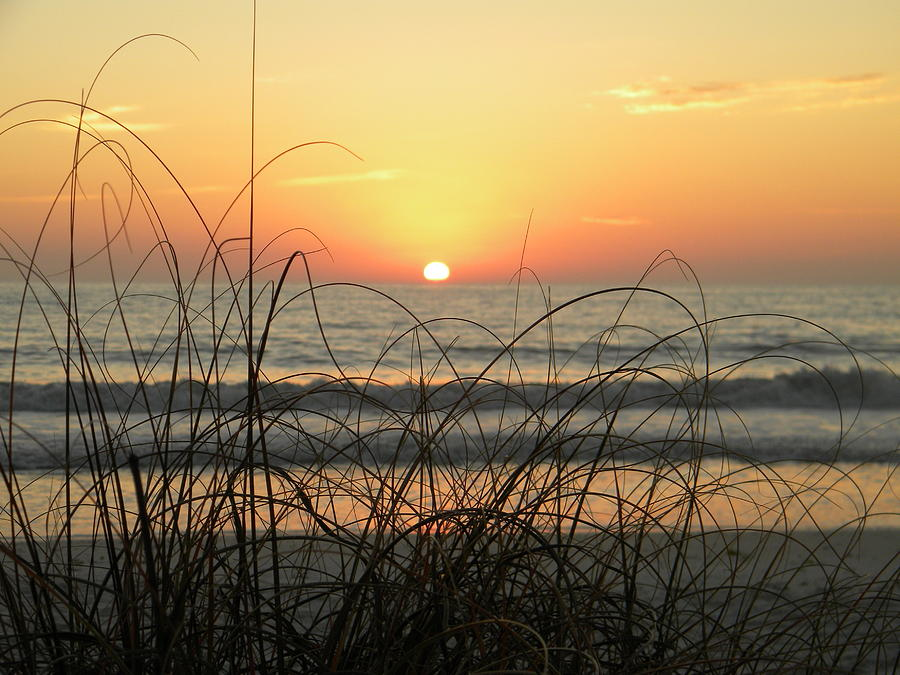 Sunset Sea Grass Photograph  - Sunset Sea Grass Fine Art Print