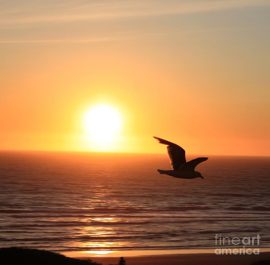 Sunset Seagull Photograph