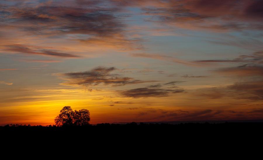 Sunset Tree Photograph