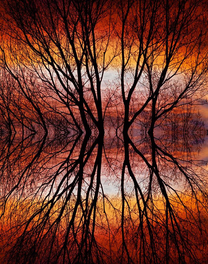 Sunset Tree Silhouette Abstract 2 Photograph