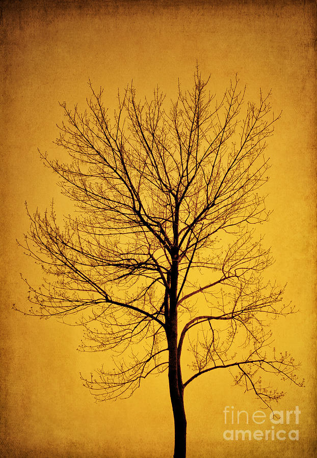 Sunset Tree Silhouette Photograph