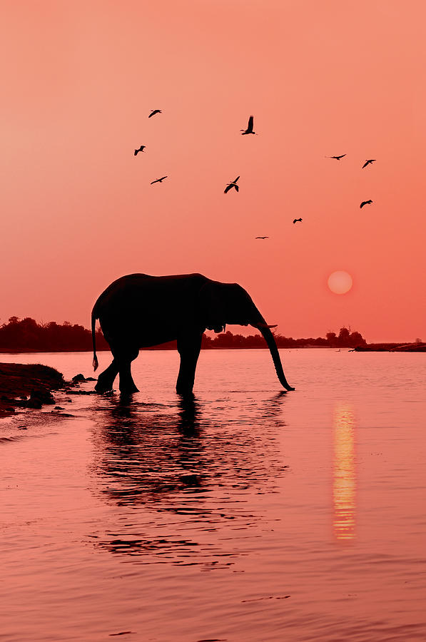 Sunset With Elephant Photograph  - Sunset With Elephant Fine Art Print