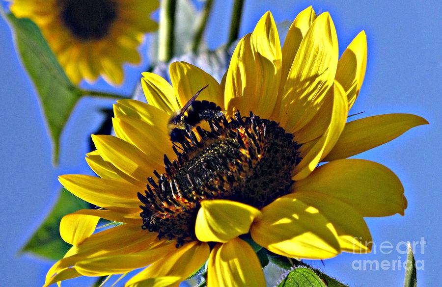Yellow Flowers Photograph - Sunshine Visitor by Louise Peardon