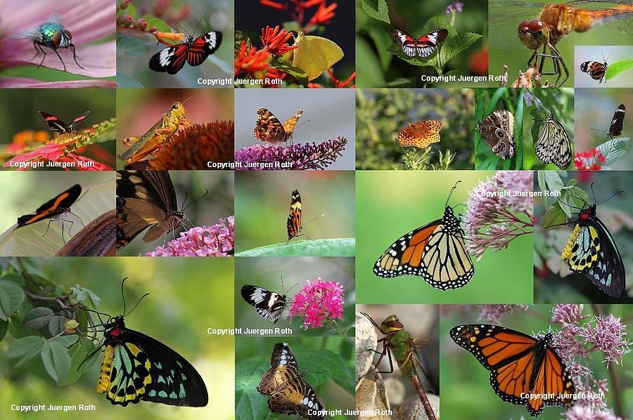 Sunshining Love Bugs Photograph