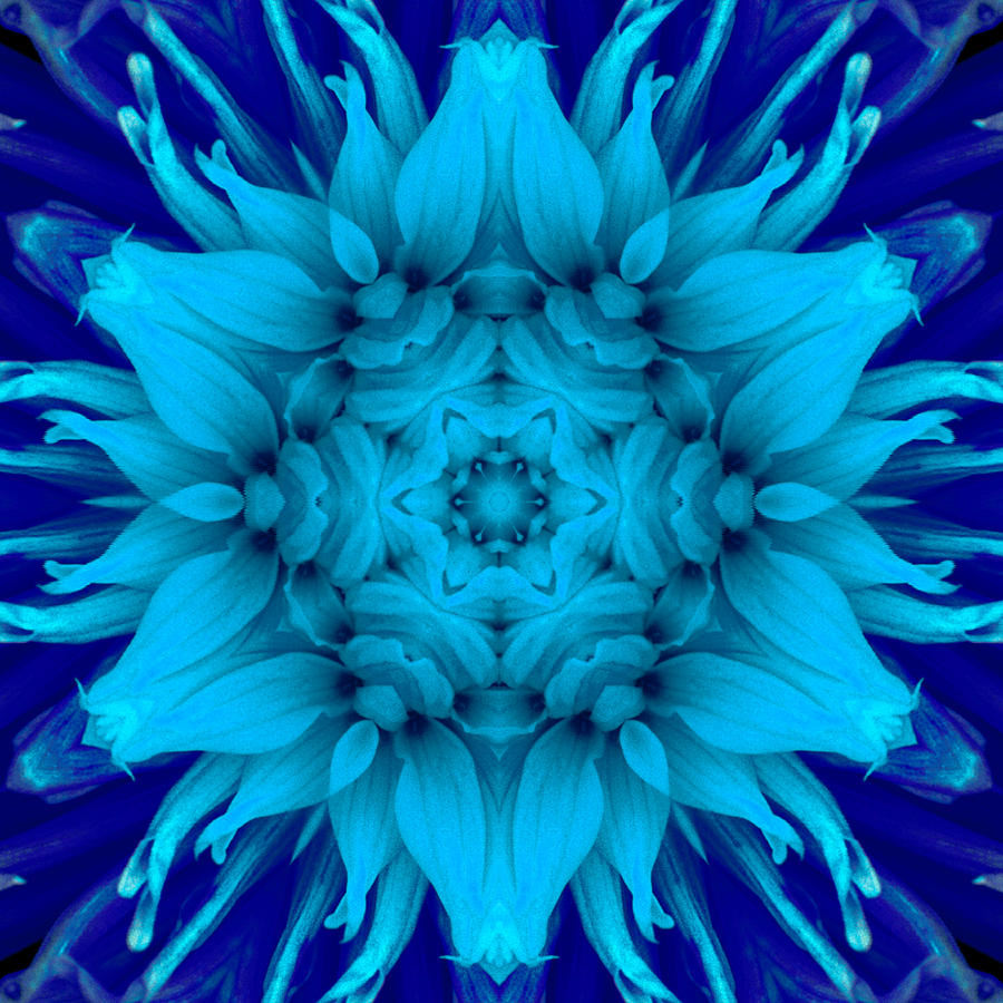 Surreal Flower No. 5 Photograph  - Surreal Flower No. 5 Fine Art Print