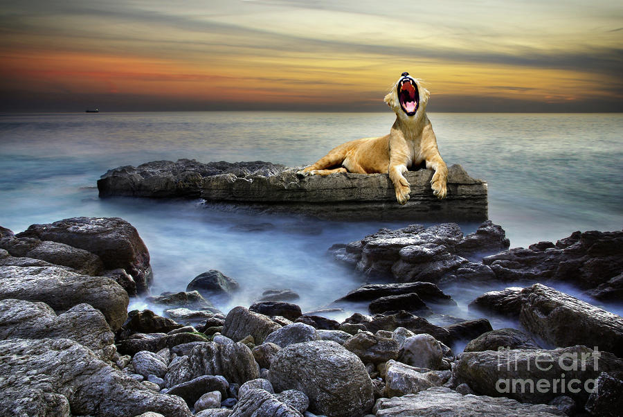 Surreal Lioness Photograph  - Surreal Lioness Fine Art Print