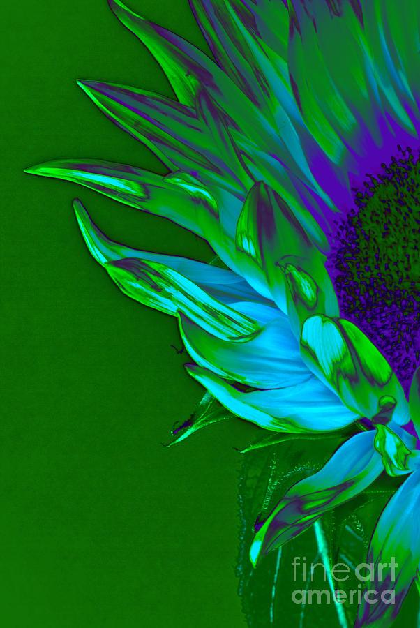Surreal Sunflower  Photograph