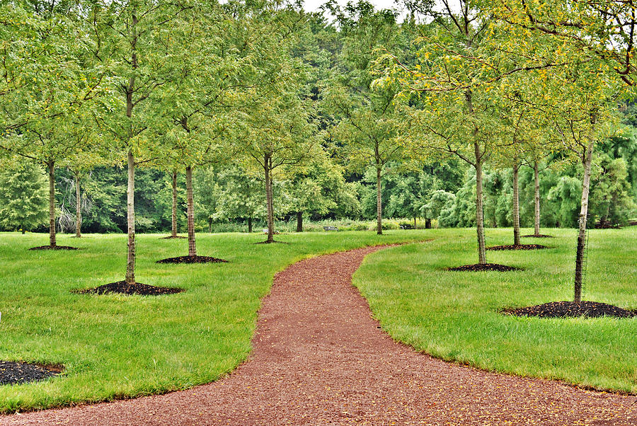 Angie trees pictures news information from the web for Small to medium trees for garden