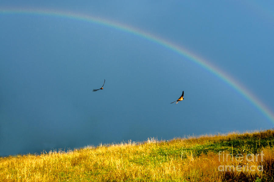 Swallows Under A Rainbow Photograph