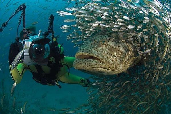 Swam Of Fish Digital Art
