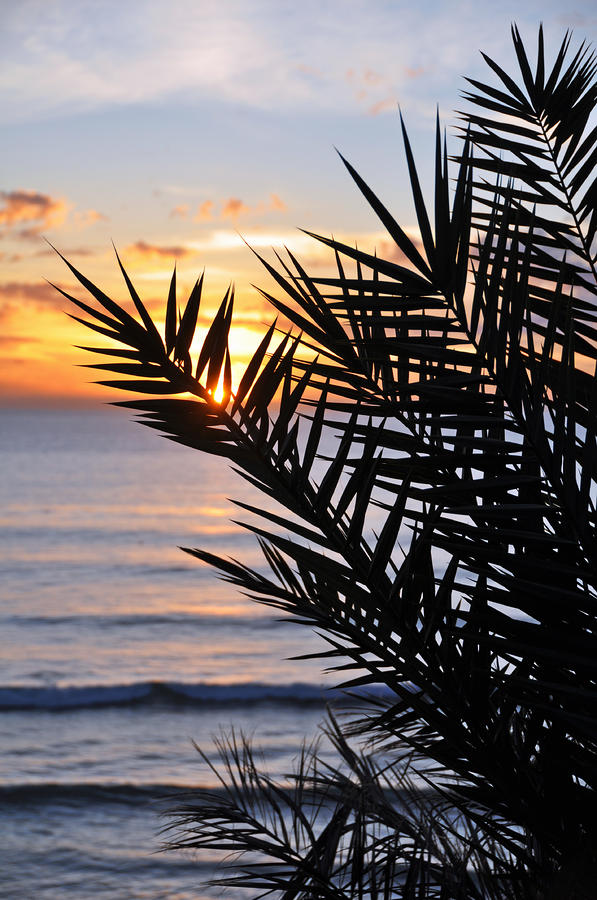 Swamis Palm Photograph