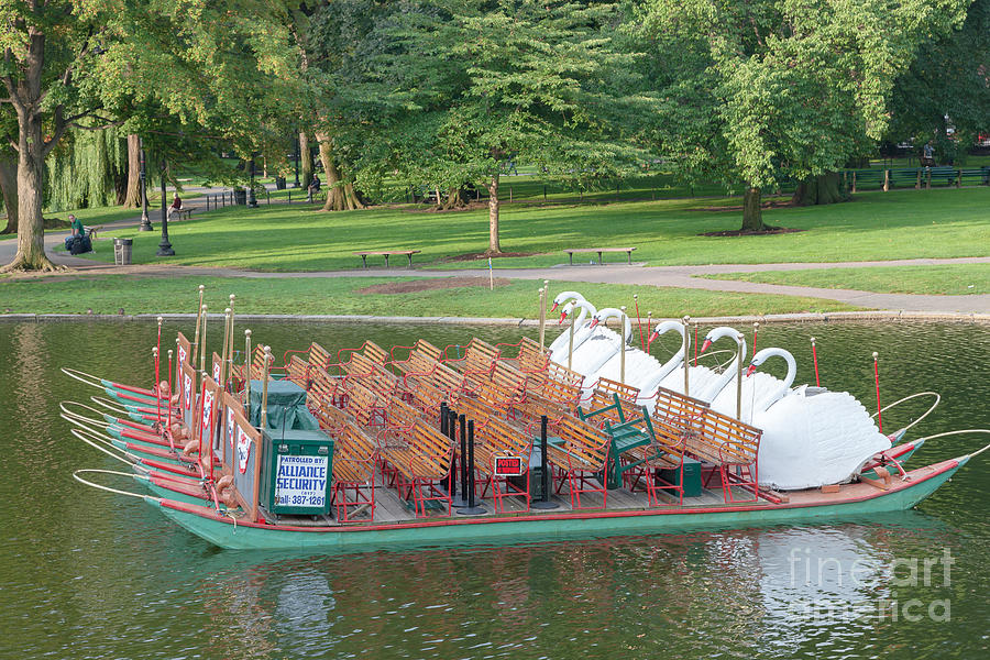 Swan Boat In Boston Public Garden Photograph