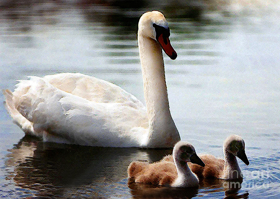 Swan Family Photograph