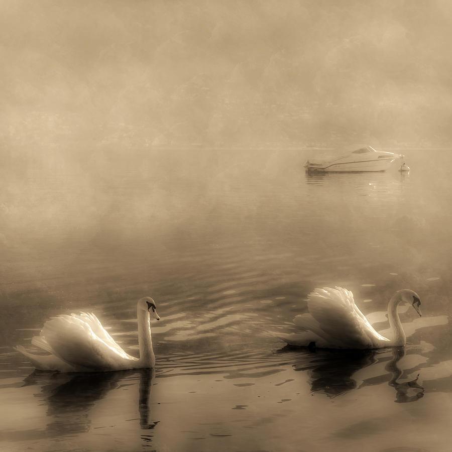 Lago Maggiore Photograph - Swans by Joana Kruse