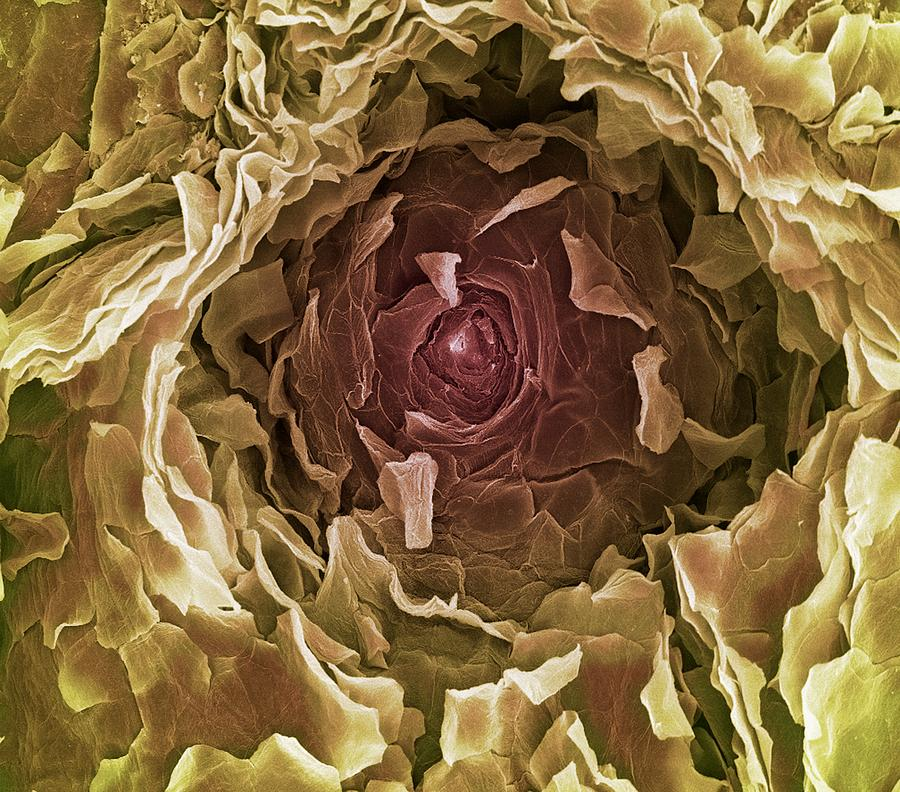Sweat Pore, Sem Photograph  - Sweat Pore, Sem Fine Art Print