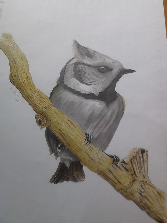 Swedis Birds Drawing