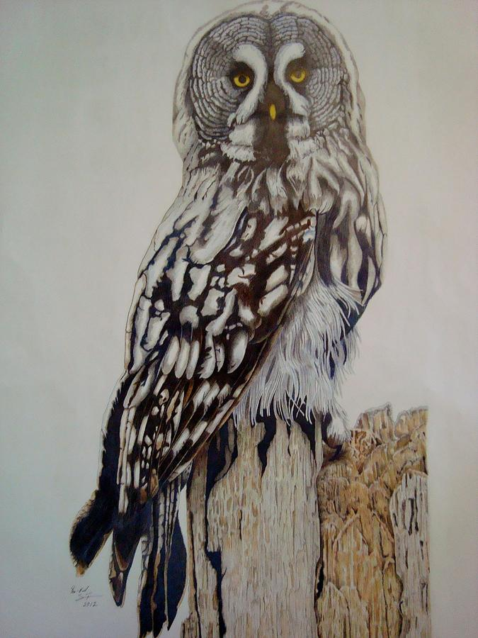 Animals Drawing - Swedish Uwl by Per-erik Sjogren
