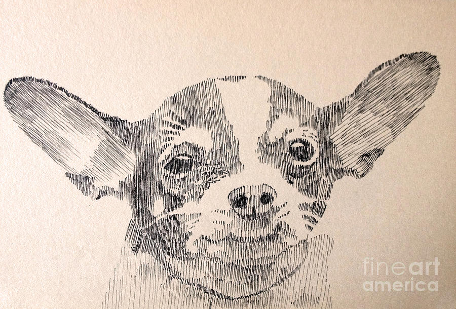 Dog Drawing - Sweet Chi by Robbi  Musser