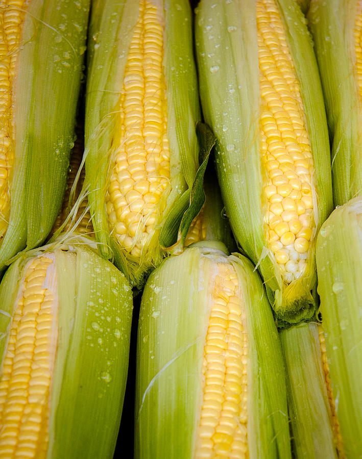Sweet Corn Photograph  - Sweet Corn Fine Art Print