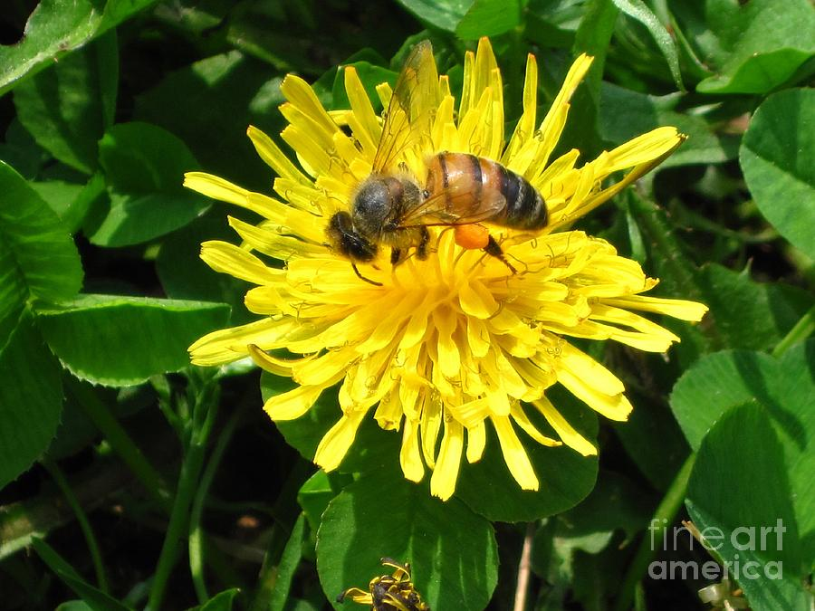 Sweet Nectar Photograph