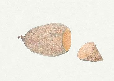 The gallery for --> Sweet Potato Drawing
