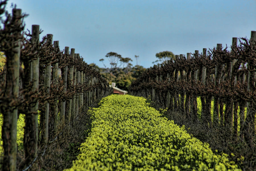 Sweet Vines Photograph  - Sweet Vines Fine Art Print