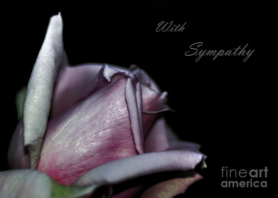 Sympathy Card With A Rose Photograph