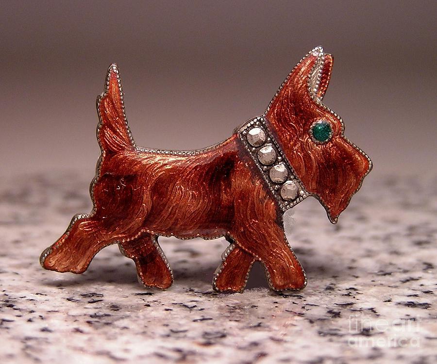 Dog Jewelry - T 10 by Dwight Goss