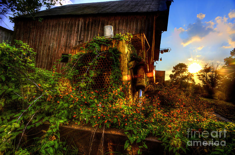 Tactor Overgrown With Flowers And Weeds At Sunset Photograph