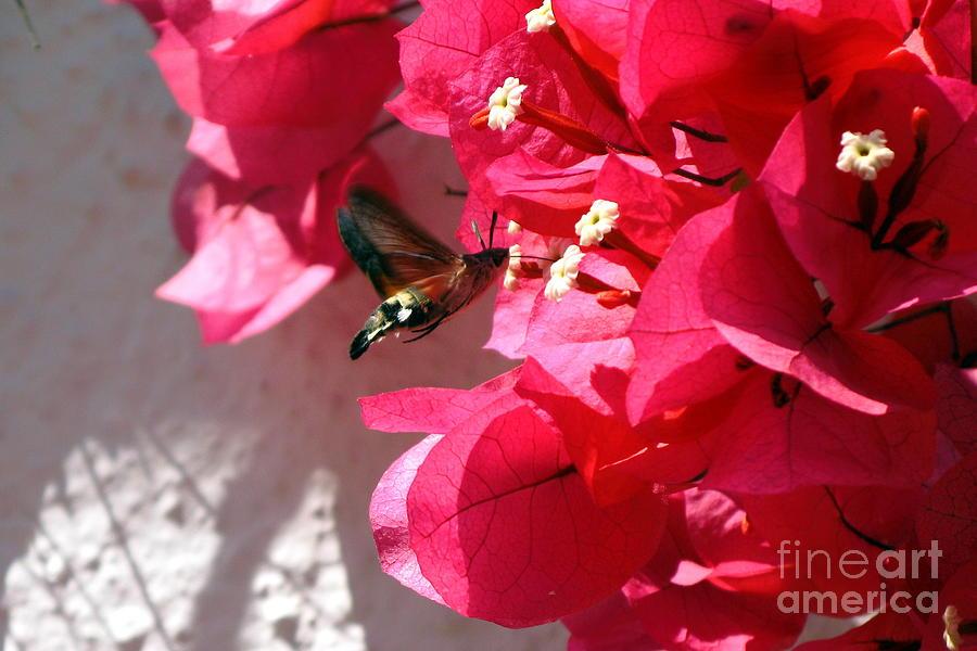 Taking The Nectar Photograph