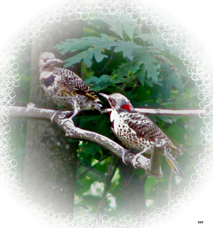 Talking Together Photograph  - Talking Together Fine Art Print