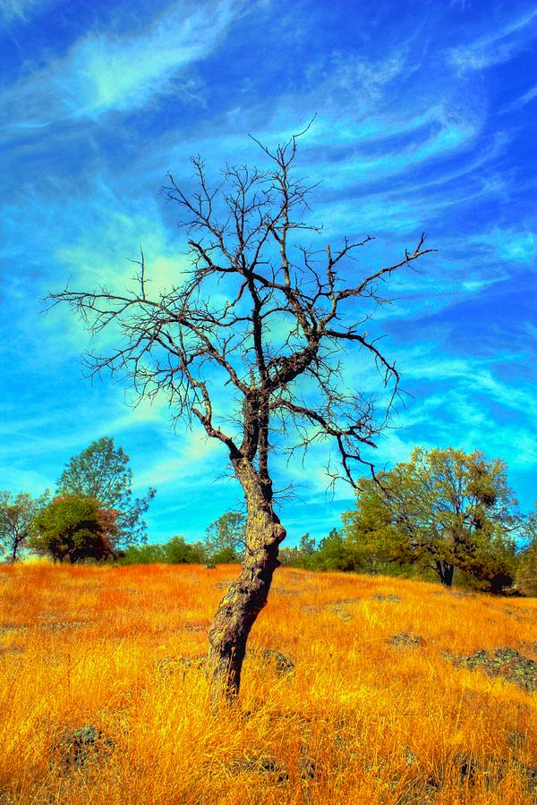 Tall Bare Tree With White Clouds And Blue Sky. Photograph