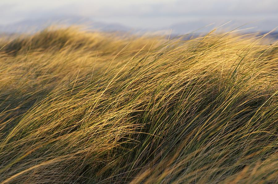 Tall Grass Blowing In The Wind is a photograph by Peter McCabe which ...