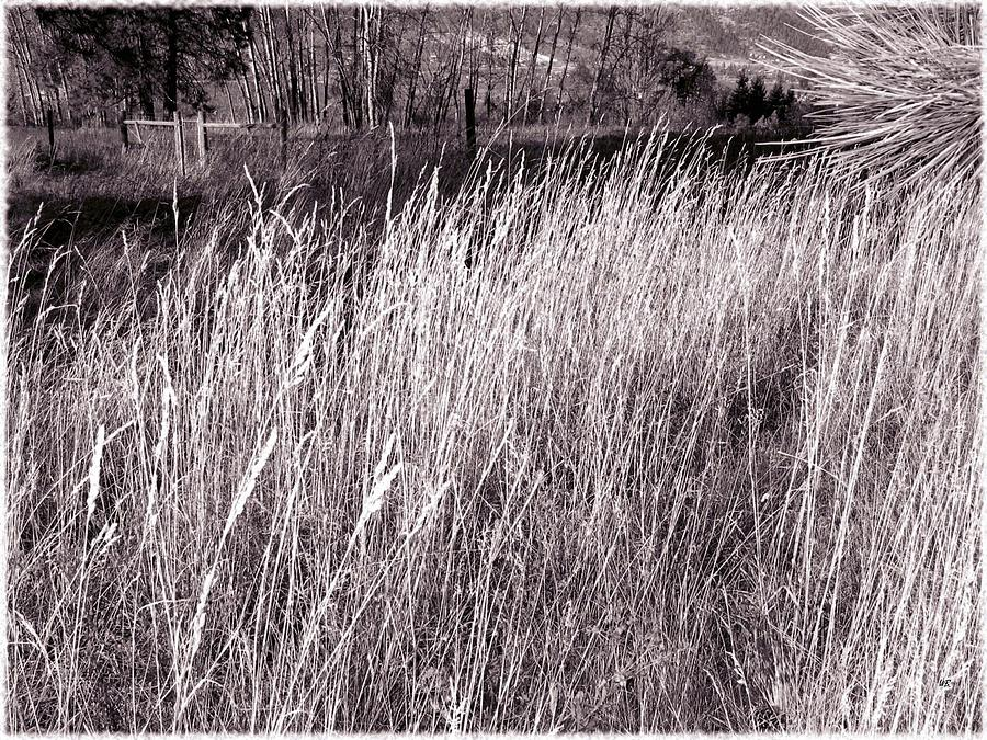 Sepia Photograph - Tall Grasses by Will Borden