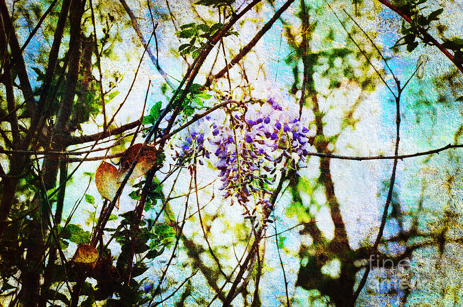 Wisteria Photograph - Tangled Wisteria by Andee Design