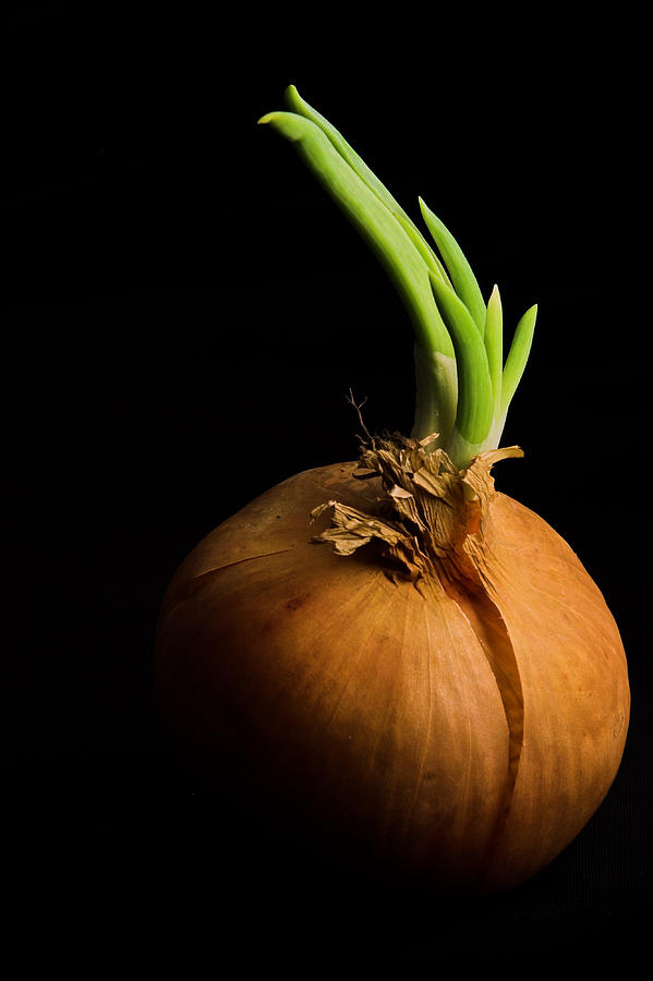 Tasty Onion Photograph