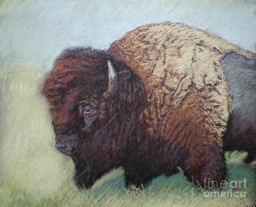 Tatanka Drawing  - Tatanka Fine Art Print