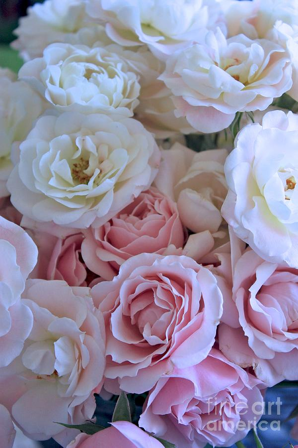 Tea Time Roses Photograph