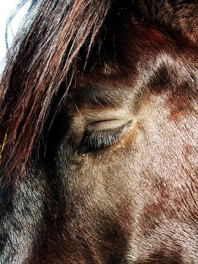 Beautiful Horse With A Tear-drop Photograph - Tear-drop by Todd Sherlock