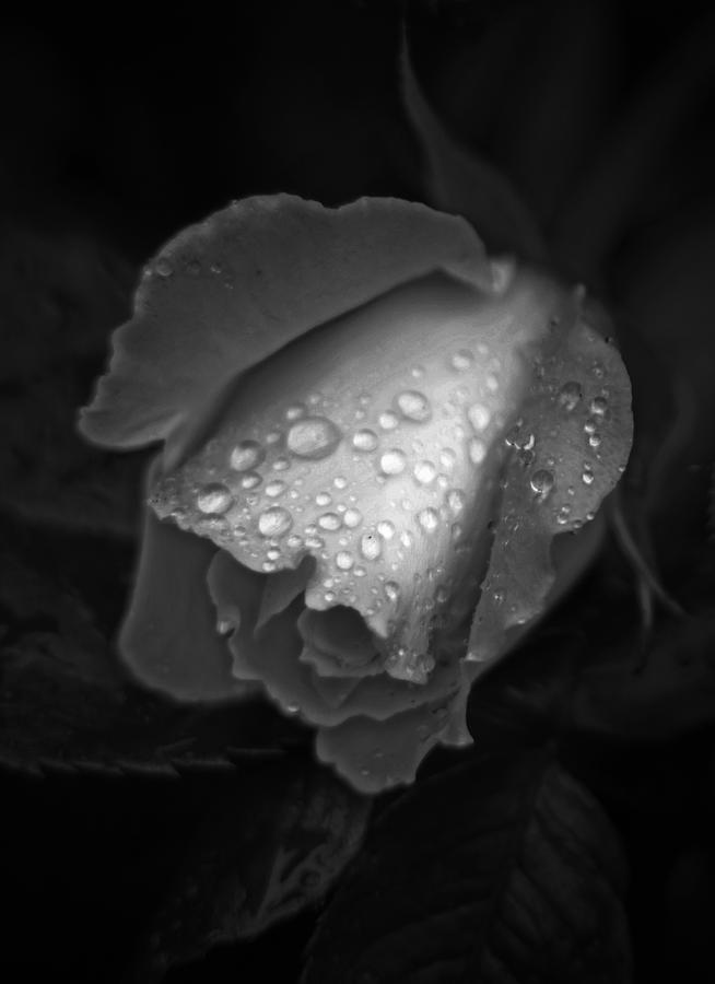 Tear Drops In Black And White by Shaun Hopkinson