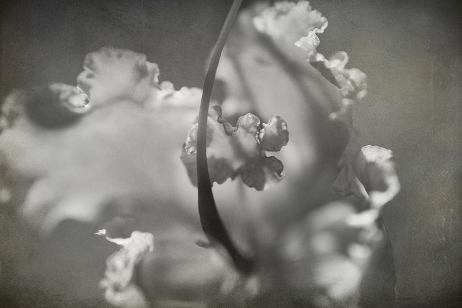Tenderness Photograph