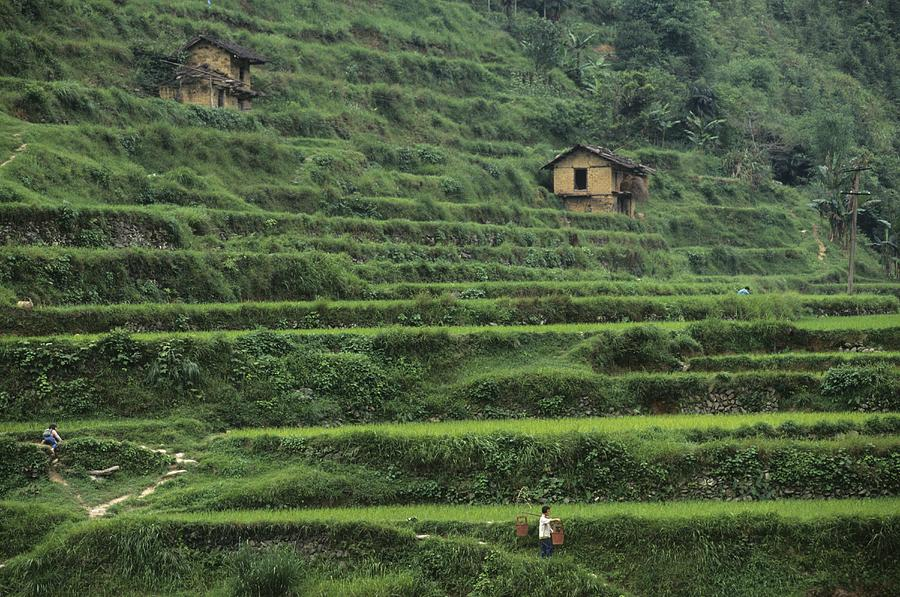 Terraces For Agriculture Photograph