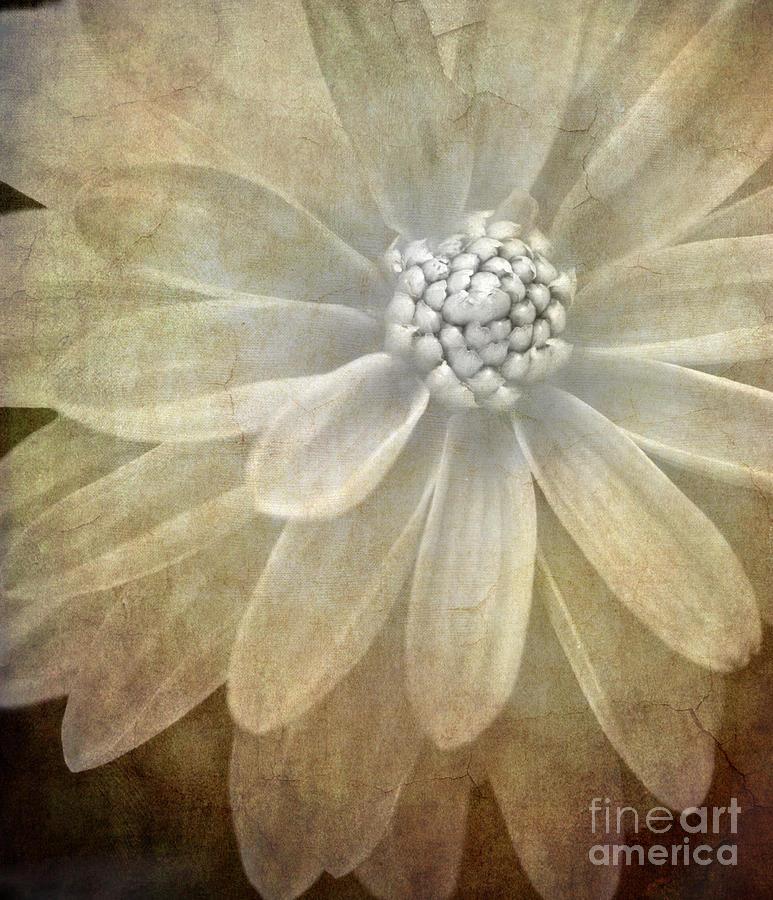 Textured Dahlia Photograph