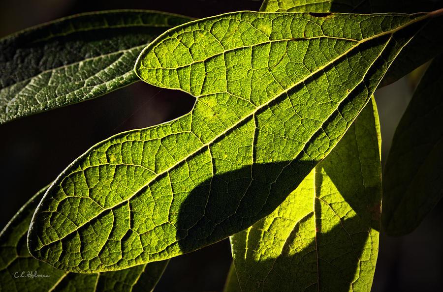 Textured Glow Photograph