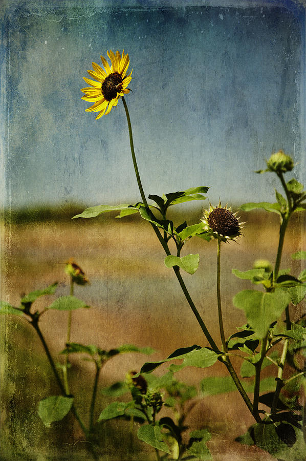 Best Sellers Digital Art - Textured Sunflower by Melany Sarafis