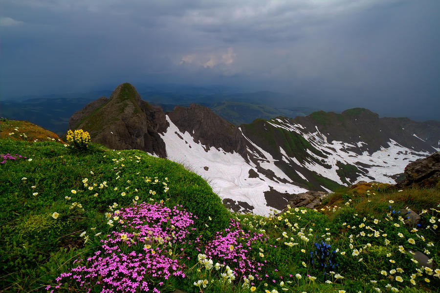 The Alps Wildflowers Photograph  - The Alps Wildflowers Fine Art Print