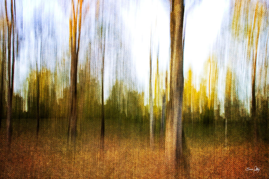 The Backyard Photograph  - The Backyard Fine Art Print