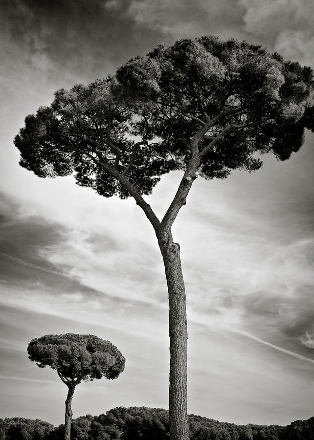 The Beauty Of Trees Photograph